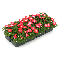 Annuals & Bedding Plants